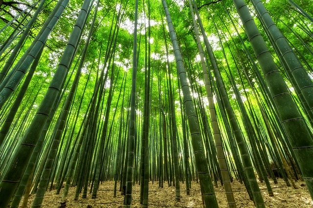 Checklist for your Contractor - Bamboo